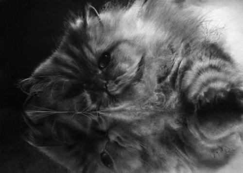 Pol Lung. Кошачьи зарисовки… (13 работ)
