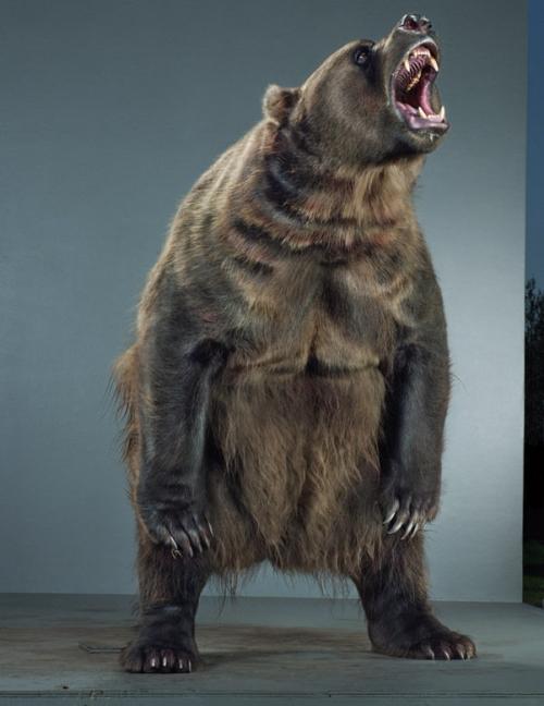 Фотографа Jill Greenberg (медведи) (38 фото)
