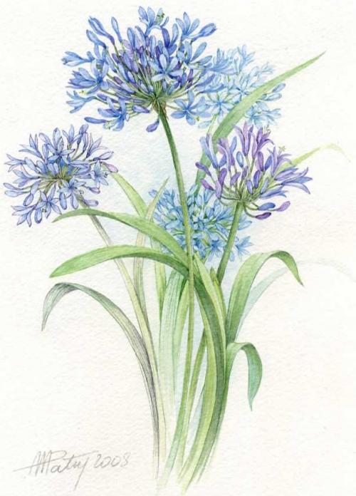 Цветочное от Anne Marie Patry-Belluteau (41 работ)