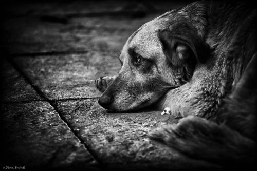 Фотограф Denis Buchel (Dog`s Life) (41 фото)