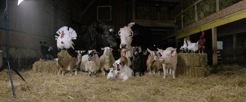 Фотосессия деревенских животных... Фотограф Rob MacInnis (16 фото)