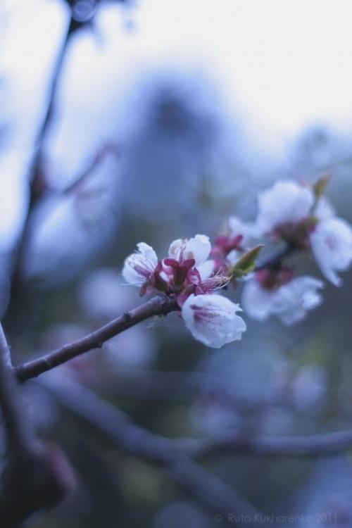 Вдохновение Весны... Фотограф Ruta Kukharenko (18 фото)