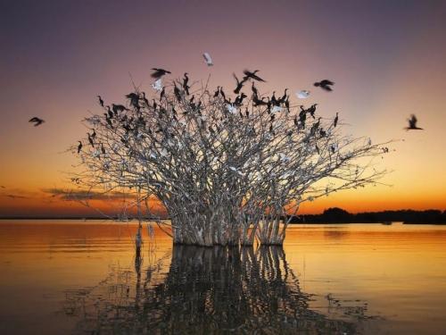 Мир в Фотографии - World In Photo 492 (60 фото)