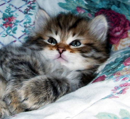 Котята - Foto (31 фото)