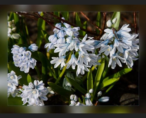 Прекрасные цветы Angelika Hoh (60 фото)