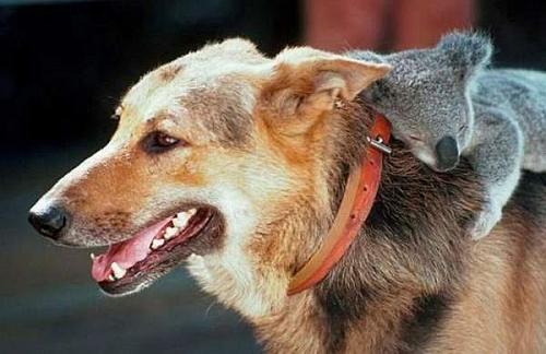Позитивные фотографии животных  (49 фото)