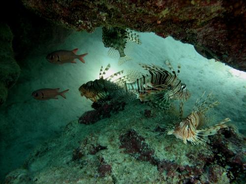 Окружающий мир через фотообъектив - Aquatic environment ( Водная среда обитания) (100 фото)