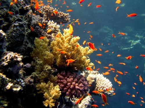 Окружающий мир через фотообъектив - Aquatic environment ( Водная среда обитания) Часть 2 (52 фото)