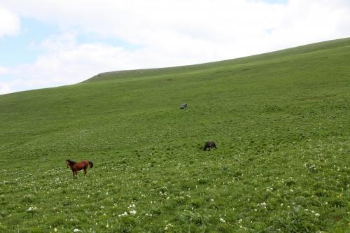 Лошади.. просторы..  (7 фото)