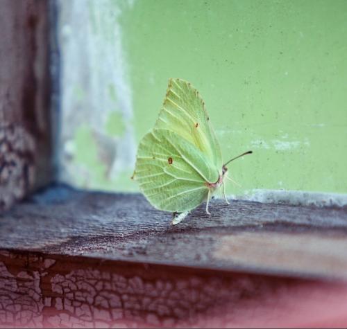 Zen-photo ч.26 (15 фото)