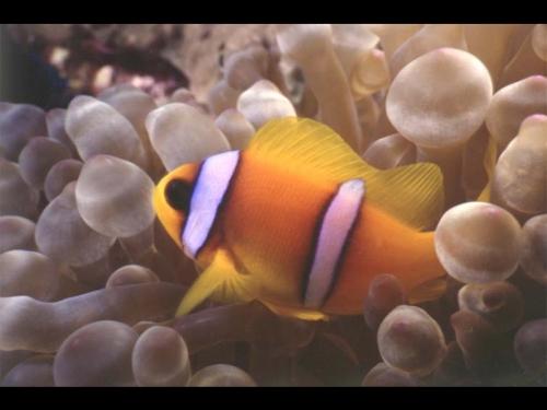 Окружающий мир через фотообъектив - Aquatic environment ( Водная среда обитания) Часть 3 (100 фото)