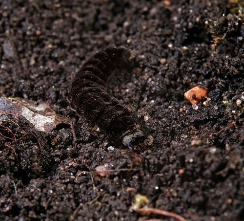 Окружающий мир через фотообъектив - Insects: Coleoptera (Насекомые: Жуки) Часть 4 (172 фото)