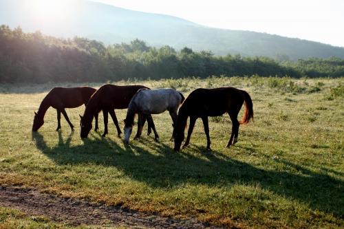 Лошади.. просторы.. ч.2 (7 работ)