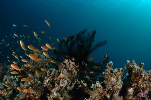 Окружающий мир через фотообъектив - Aquatic environment ( Водная среда обитания) Часть 5 (60 фото)