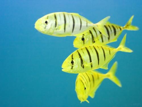 Окружающий мир через фотообъектив - Aquatic environment ( Водная среда обитания) Часть 7 (310 фото)
