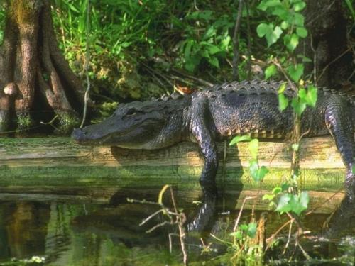 Окружающий мир через фотообъектив - Пресмыкающиеся и земноводные (Reptiles&Amphibious) (58 фото)