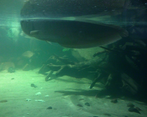 Окружающий мир через фотообъектив - Aquatic environment ( Водная среда обитания) Часть 4 (100 фото)