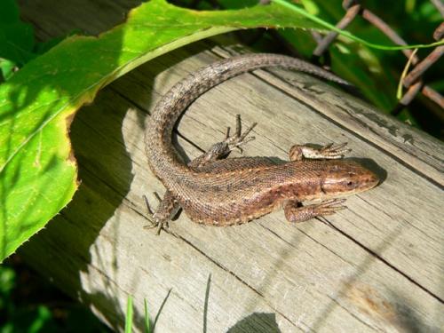 Окружающий мир через фотообъектив - Пресмыкающиеся и земноводные (Reptiles&Amphibious) Часть 2 (214 фото)