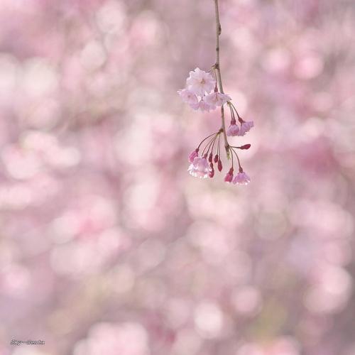 Фотоработы Sky-Genta (23 фото)