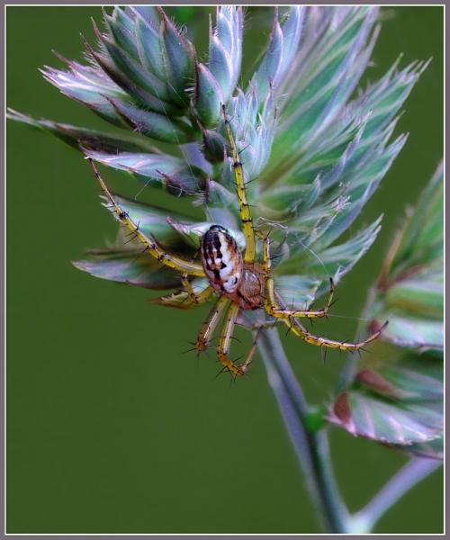 Окружающий мир через фотообъектив - Пауки и другие беспозвоночные (Arachnoideus&Other invertebrates) Часть 2 (134 фото)