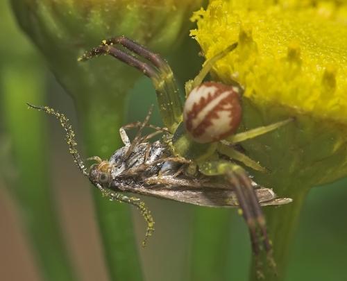 Окружающий мир через фотообъектив - Пауки и другие беспозвоночные (Arachnoideus&Other invertebrates) Часть 3 (229 фото)