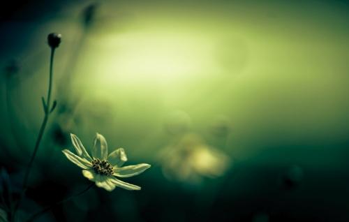 Zen-photo ч.34 (13 фото)
