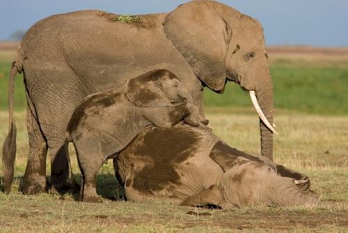 Окружающий мир через фотообъектив - Млекопитающие (Mammalia) Часть 5 (124 фото)