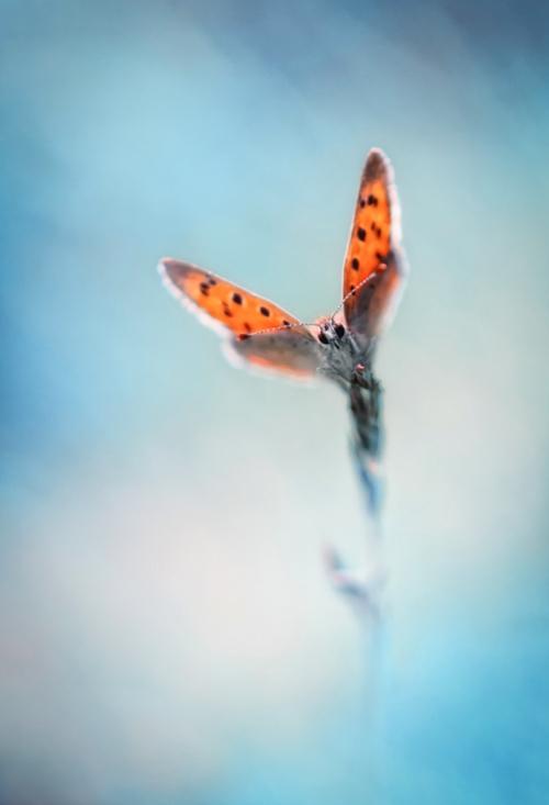Zen-photo ч.41 (14 фото)