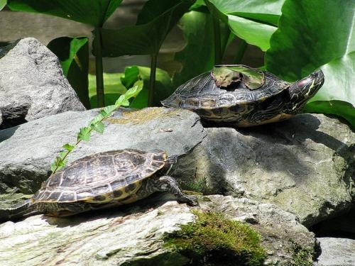 Окружающий мир через фотообъектив - Пресмыкающиеся и земноводные (Reptiles&Amphibious) Часть 5 (66 фото)