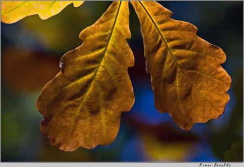 Окружающий мир через фотообъектив - Дикорастущие растения (Wild Plants) Часть 2 (273 фото)