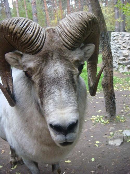 Окружающий мир через фотообъектив - Млекопитающие (Mammalia) Часть 3 (344 фото)