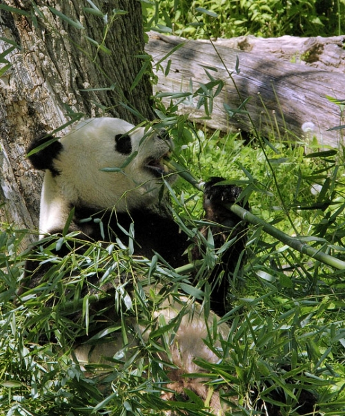 Окружающий мир через фотообъектив - Млекопитающие (Mammalia) (90 фото)