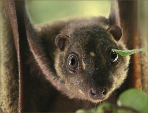 Окружающий мир через фотообъектив - Млекопитающие (Mammalia) Часть 2 (162 фото)