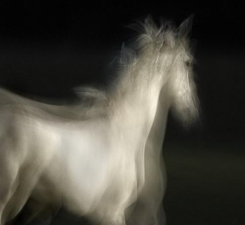 Работы фотографа Milan Malovrh, Словения (27 фото)