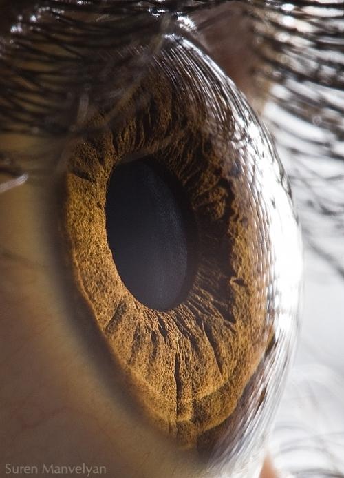 Глаза от Suren Manvelyan (26 фото)