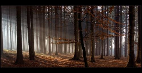 Мир в Фотографии - World In Photo 507 (60 фото)