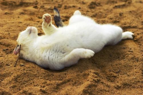 Окружающий мир через фотообъектив - Домашняя кошка (Domestic Cat) (192 фото)