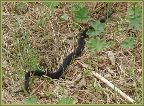Окружающий мир через фотообъектив - Пресмыкающиеся и земноводные (Reptiles&Amphibious) Часть 4 (143 фото)