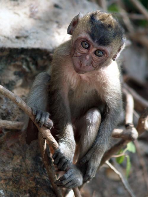 Окружающий мир через фотообъектив - Млекопитающие (Mammalia) Часть 4 (178 фото)