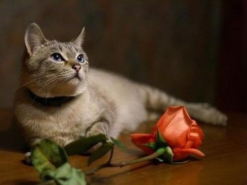 Окружающий мир через фотообъектив - Домашняя кошка (Domestic Cat) Часть 2 (187 фото)