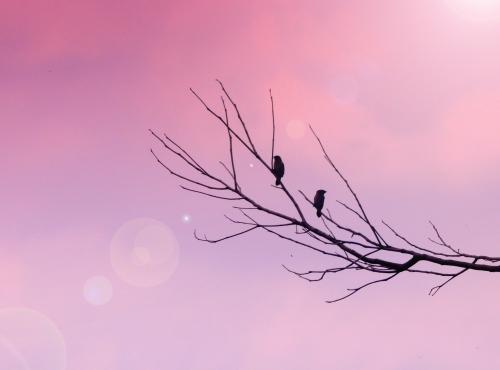 Zen-photo ч.44 (12 фото)