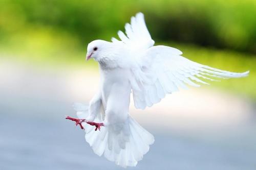 Мир в Фотографии - World In Photo 513 (60 фото)