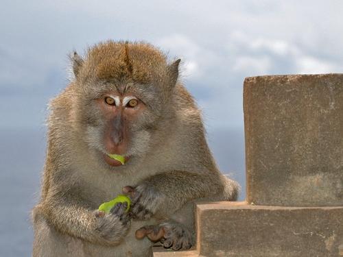 Окружающий мир через фотообъектив - Млекопитающие (Mammalia) Часть7 (144 фото)