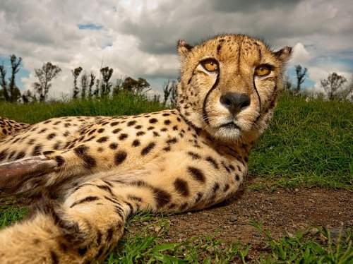 Лучшие фотографии National Geographic за июль (31 фото)