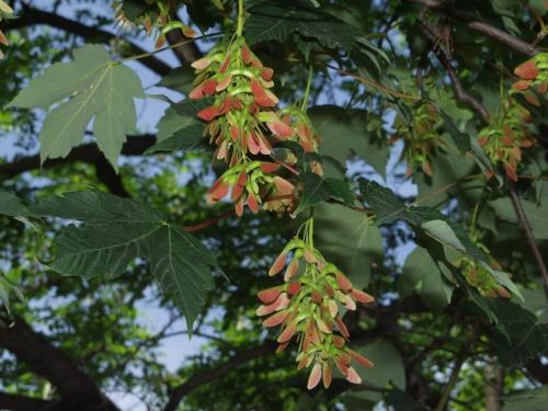 Лето и цветы (116 фото)