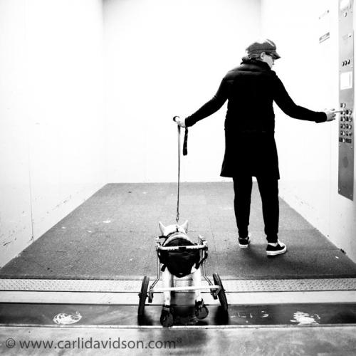 Фотограф Carli Davidson (дополнение) (75 фото)