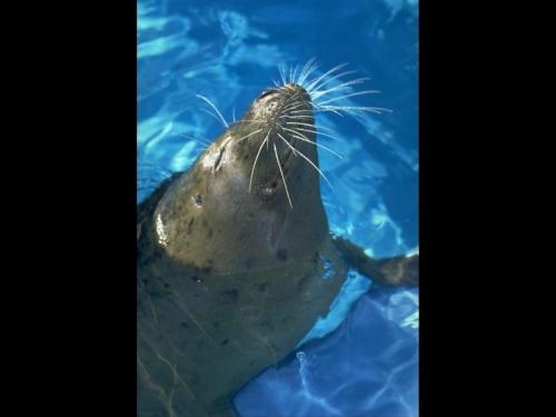 Окружающий мир через фотообъектив - Млекопитающие (Mammalia) Часть 6 (68 фото)