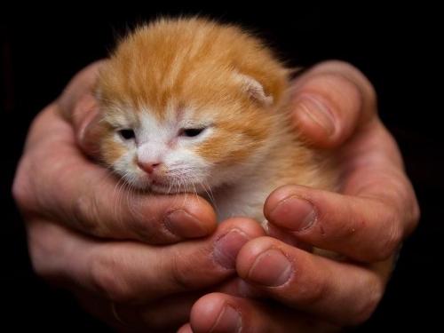 Окружающий мир через фотообъектив - Домашняя кошка (Domestic Cat) Часть 3 (115 фото)