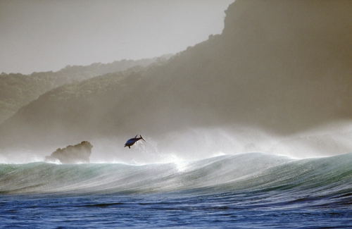 Дельфины - Фотограф Greg Huglin (99 фото)