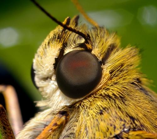Насекомые под микроскопом - фото Стив Гшмайсснер (142 фото)